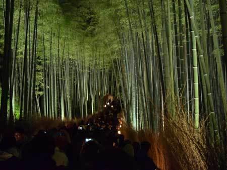 竹林の小径ライトアップ