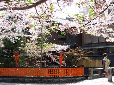 満開の桜に映える巽橋界隈